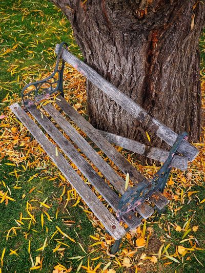 Grass High Angle View Field Outdoors Day No People Nature Full Frame Backgrounds Close-up Beauty In Nature Fall Colors Autumn Colors Bench