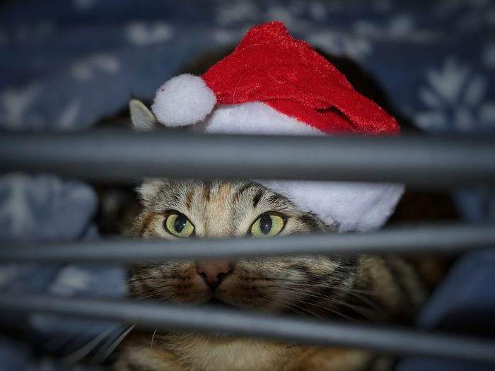 Cat Animals Pets Cute Home Interior Domestic Animals Feline Animal Body Part Mammal Christmas Santa Hat Celebration Holiday - Event Macro Close-up Mix Yourself A Good Time The Week On EyeEm Pet Portraits