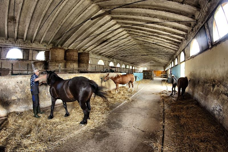 Asinelli Horses Italian Nature Mule Nature Parco Regionale Pisa San Rossore Toscana Tuscany