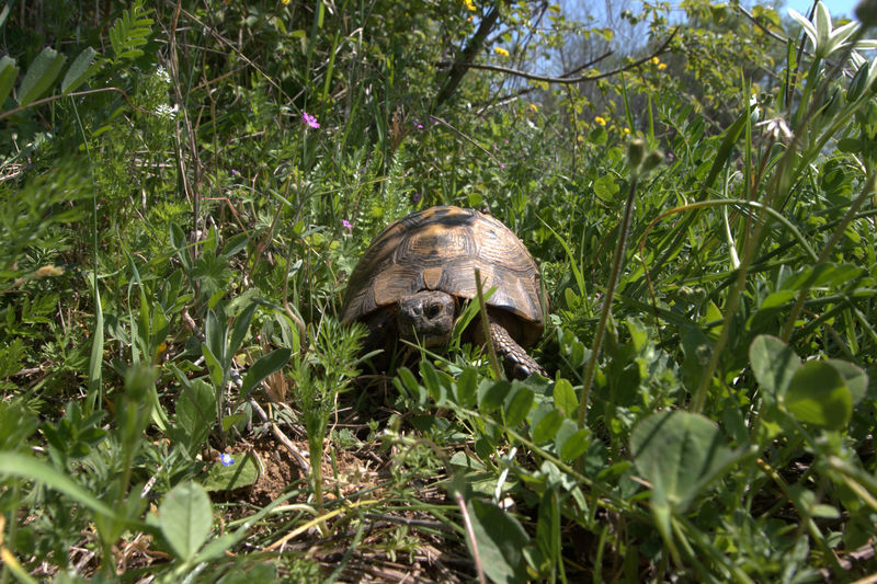 View of a turtle on field