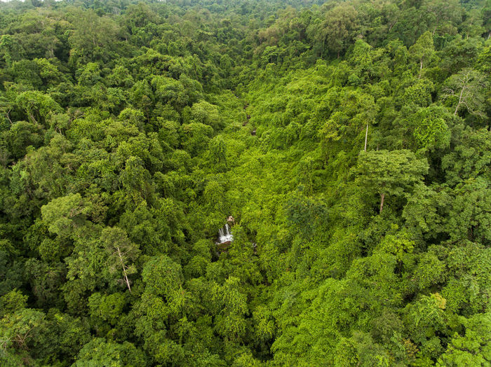 Aerial top view green forest for background Tree Green Color Forest Plant Foliage Lush Foliage Land Scenics - Nature Transportation Beauty In Nature Growth High Angle View Nature Day Non-urban Scene Environment Tranquil Scene Mode Of Transportation WoodLand Tranquility No People Outdoors Rainforest Evergreen Tree Pine Woodland