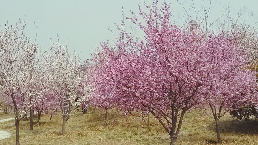It is spring!  Campus Spring Lovely Day Good Mood :)