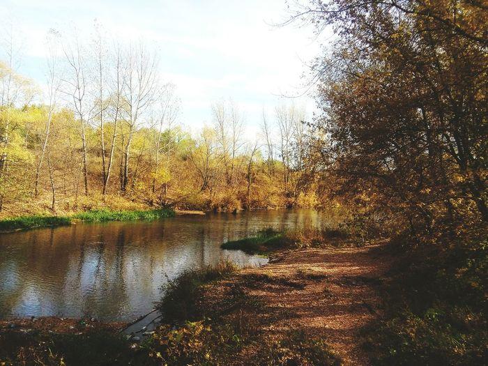 осеньвгороде Золотая осень листья желтые First Eyeem Photo замечательноеместо природа и красота осень прекрасна 🌾🍂🍃 красивоеместо