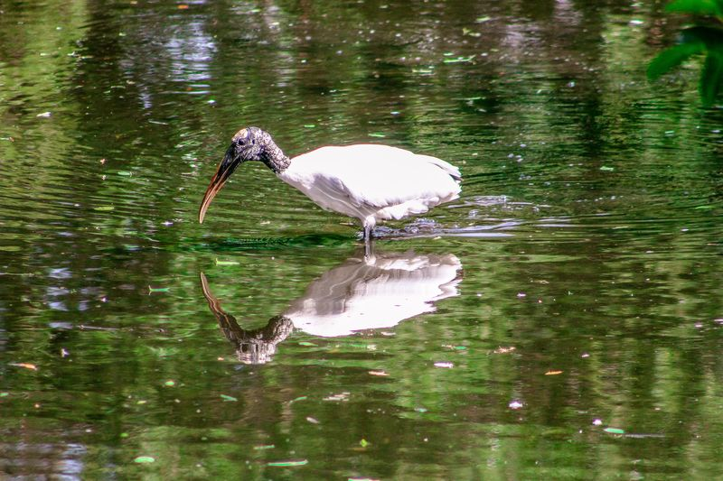 View of a bird in calm water