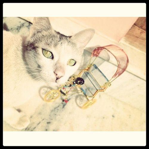 Mama kitty. Kittycat Pussycat Adorablefeline Catsofinstagram animalsofinstagram