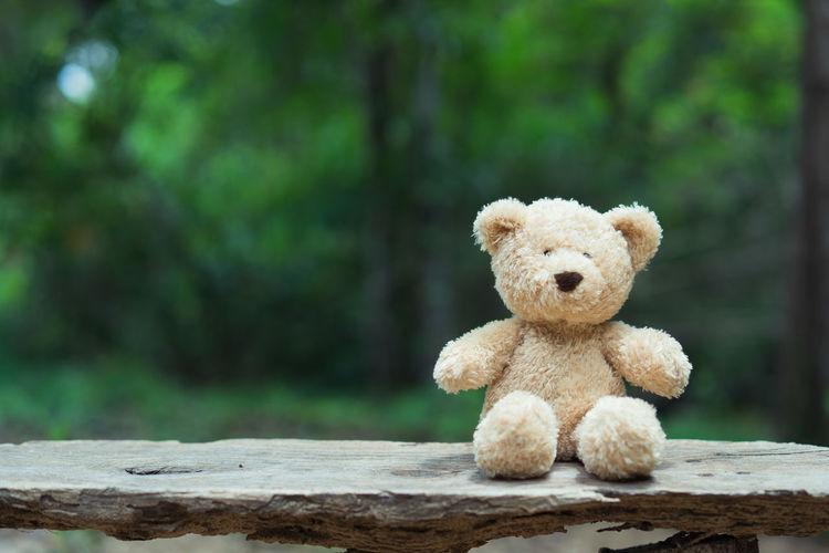 Teddy bear against trees on wood