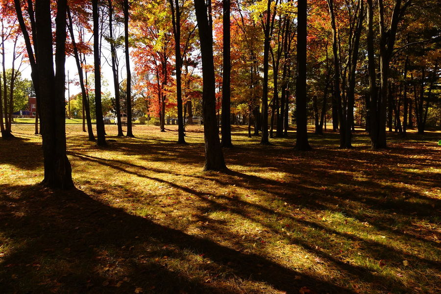 Forest Tranquil Scene Beauty In Nature Landscape Shadows Trees Park Autumn Autumn 2016 Fall Fall Colors Fall Beauty Getting Inspired Beautiful Light And Shadow Nature Lover Fallen Leaves EyeEm Best Shots Beautiful Colors Of Nature Beauty In Nature Fall Season Eye4photography