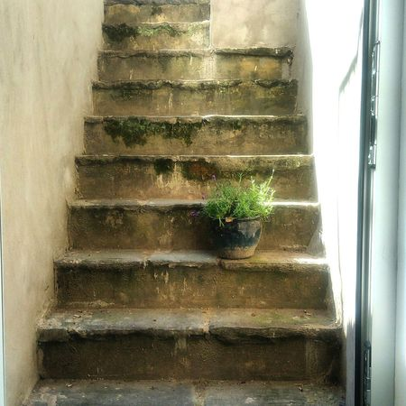 Security: hiding the keys to the house under the plant pot. Bristol Stairs Stairway Basement Plantpot Montpelier Summer Summertrip