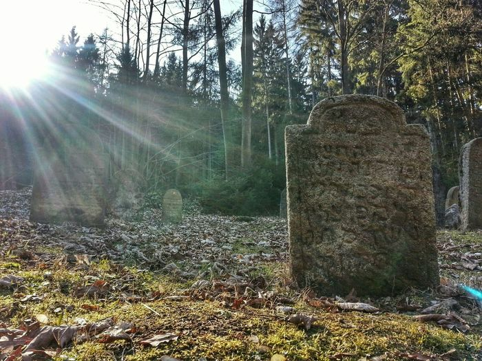 Cemetery Jewish Jewishcemetery Sunlight Old Trip Walking Sightseeing Forest Morning
