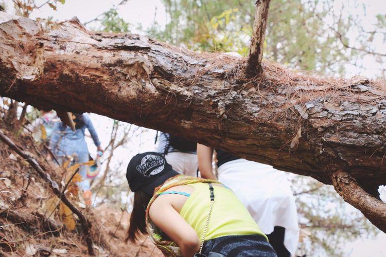 Women walking on fallen tree in forest