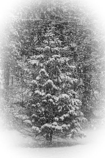 Digital composite image of pine tree in forest