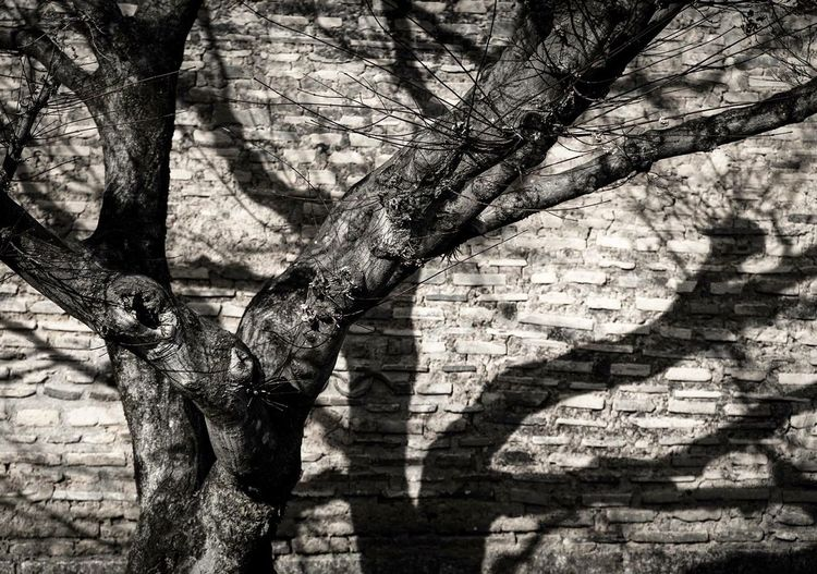 Tree Tree Trunk Branch Day Outdoors Growth No People Nature Bare Tree Architecture Close-up Kyoto, Japan Janpan Space Nature Photography Nature Cherry Blossoms Winter shadow Shadow Shadows & Lights EyeEm Diversity EyeEmNewHere The Secret Spaces TCPM