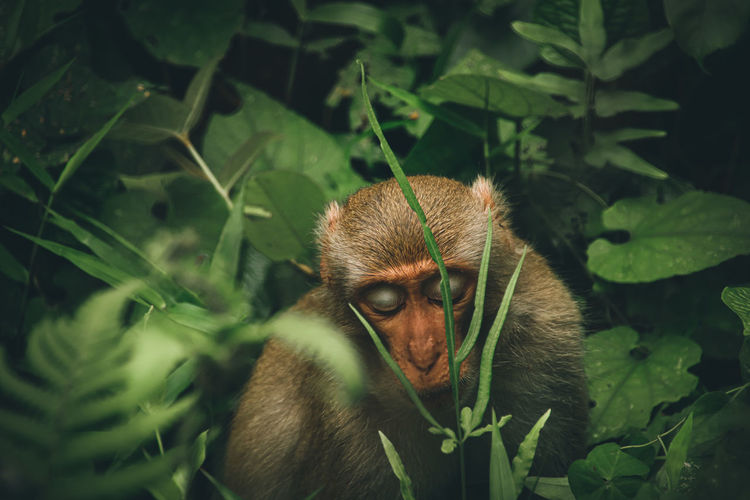 View of monkey among the green foliage
