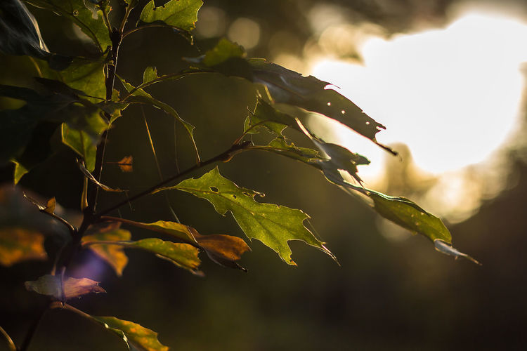 Beauty In Nature Close-up Day Fragility Freshness Growth Leaf Low Angle View Nature No People Outdoors Plant Tree