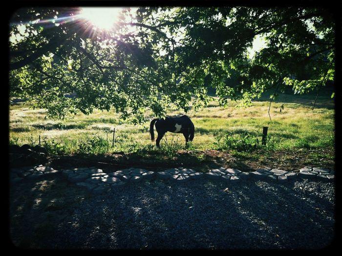 Backyard Horse Spring Countryside