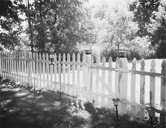Fence Taking Photos My Passion Getting Creative Birdfeeder Lawn Decoration Birds