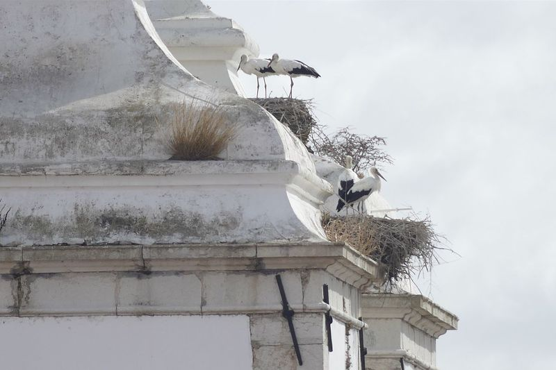 Stork nest Architecture Built Structure Building Exterior Low Angle View Sky Day Nature