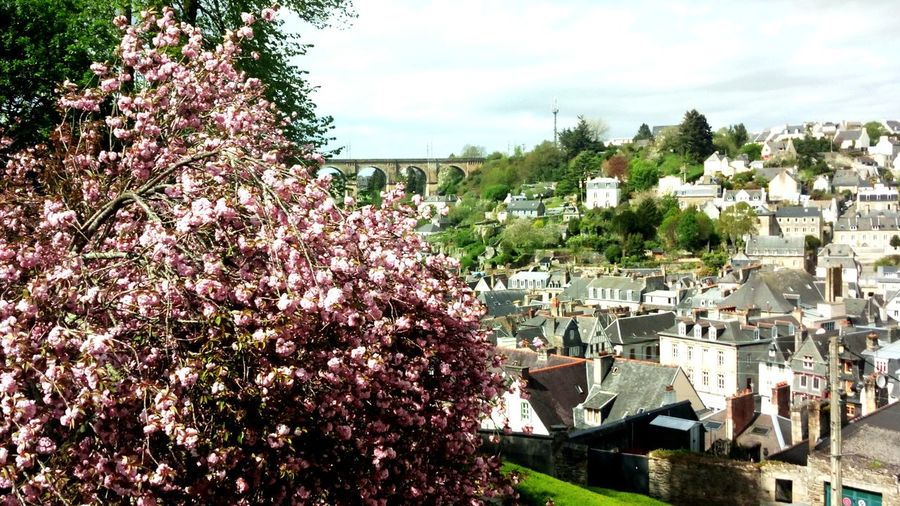 Spring Brittany FinistèreNord Breizh Viaduc  Tree Flower Water Sky Architecture Building Exterior Built Structure TOWNSCAPE Town