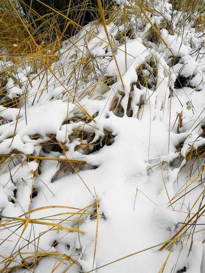 Snow Snow ❄