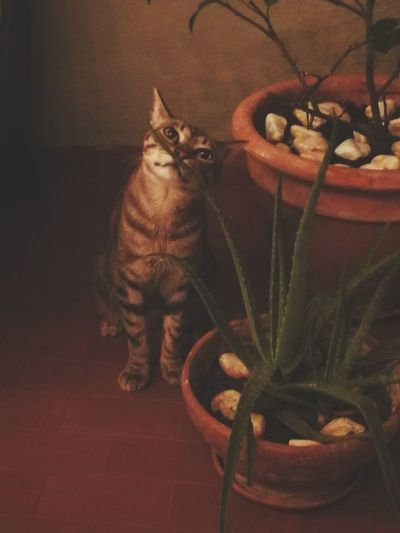 Portrait of cat sitting on potted plant