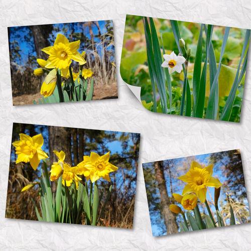 Narcissus Collage Hitachi Seaside Park Japan Flower EyeEm Flower ひたち海浜公園?2015.01.27?