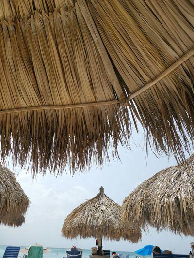Water Palm Tree