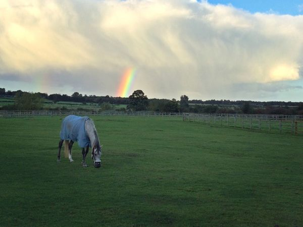 Grass Field Men Landscape Rear View Full Length Cloud - Sky Rainbow Casual Clothing Holding Rural Scene Person Sky Day Agriculture Farm Tranquility Tranquil Scene Beauty In Nature Farm Countryside Northumberland Horse