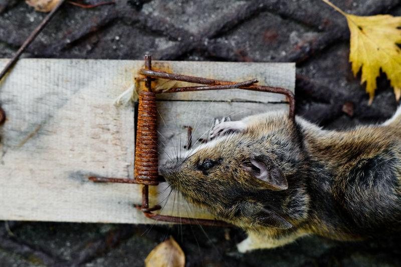 High angle view of animal on wood