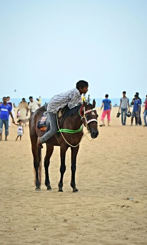 Service Animals Horse Beach India Seventeen Rideformoney Jockey Fullyloaded Travelphotography EyeEm Best Shots Picturing Individuality