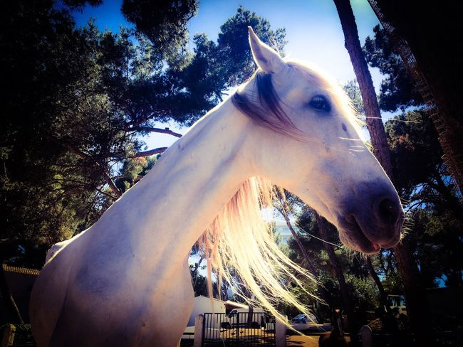 Horse Tree Animal Themes Domestic Animals One Animal No People Day Outdoors Mammal Sky Close-up Nature White Horse White Horse Portrait Spanish Horses Horses