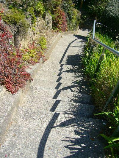 早く暖かくならないかなぁ… 過去 影 Morning Light And Shadow Shadow Sunny Day Spring Green Plants Stairs Nature Nature_collection Nature Photography EyeEm Best Shots No People No Edit/no Filter