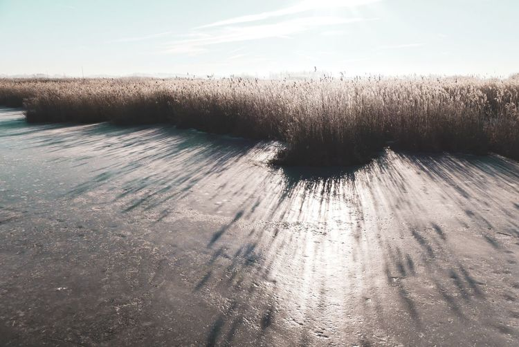 Light And Shadow Grass Plant Season  Tranquility Scenics Backgrounds Beauty In Nature Frozen No People Winter Federsee Tranquil Scene Dried Plant Dried Nature Outdoors Rural Scene Betterlandscapes Environment Scenics - Nature Water Sunlight Sky Landscape Idyllic Frozen Lake Calm Countryside Plant Life