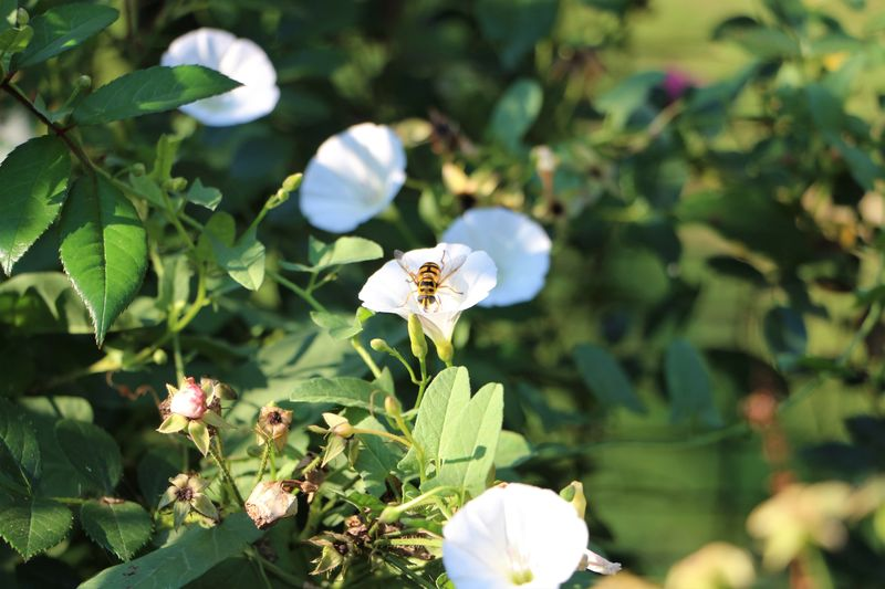 Nature Photography Beauty In Nature Close-up Day First Eyeem Photo Flower Flower Head Flowering Plant Focus On Foreground Fragility Freshness Green Color Growth Inflorescence Leaf Nature No People Petal Plant Plant Part Pollen Pollination Softness Vulnerability  White Color