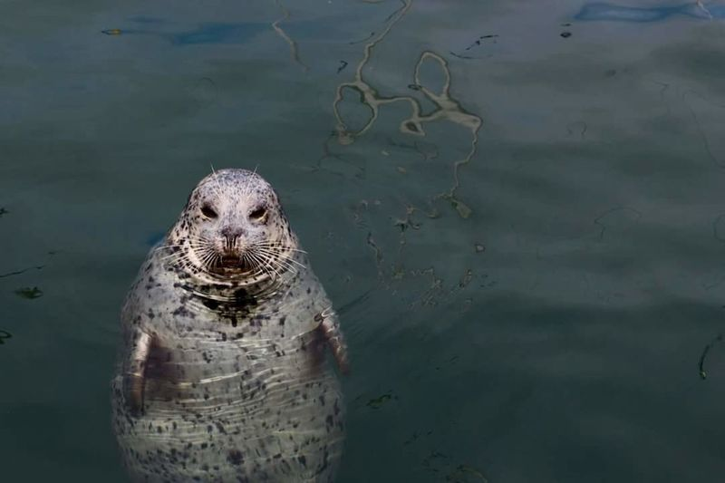Unexpected Hello. Seal Ocean Harbour Harbour Seals Water Bc Wildlife & Nature Nature Photography Ocean Photography Ocean Life Cute