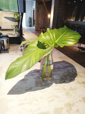 Green Color Leaf Built Structure No People Plant Freshness Indoors  Refreshment