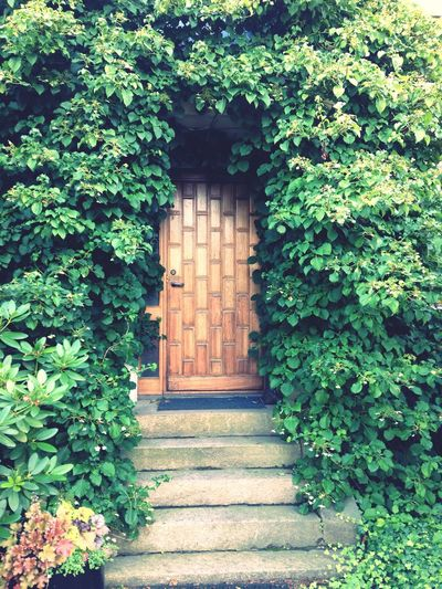 Love this!! Garden Trees Door