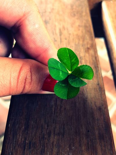 Lucky in the morning :) Garden Outdoors Light And Shadow Pattern Brown 4 Leaf Clover 4 Leaf Clover Human Hand Human Body Part Plant Part Body Part Human Finger One Person Green Color Holding Close-up Wood - Material Leaves Nature