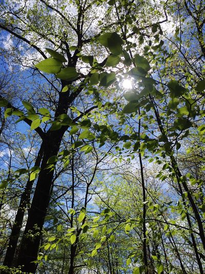 Tree Branch Growth Low Angle View Nature Beauty In Nature Day No People Green Color Sunlight Outdoors Forest Freshness Leaf Tranquility Scenics Sky