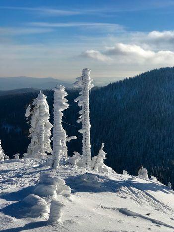 Winter Bayerischer Wald Winter Wonderland Winter Cold Temperature Snow Sky Beauty In Nature Nature Cloud - Sky Frozen Outdoors