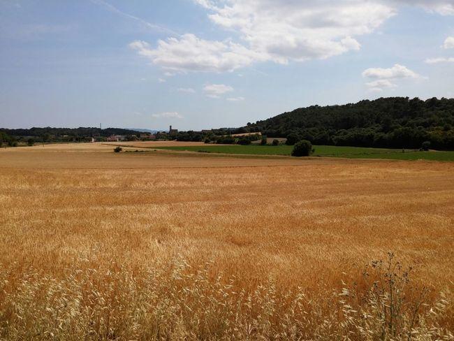 Paisajes que enamoran😍 Campos Cams Poblescatalans Pobles Catalunya Catalunyafotos Naturaleza Vistas