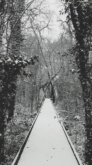 Snow in my forest ❄😍 my running was perfect👌 Running Time Runninggirl Workout Outdoorworkout Training Day Snow ❄ Beautiful Nature Nature Photography Naturelovers Natural Beauty Myforest Wintertime Nature_collection