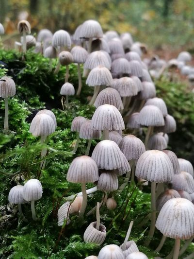 Growth Nature Outdoors Softness Beauty In Nature Field Grass Day Fragility No People Freshness Close-up Mushrooms Forest Photography