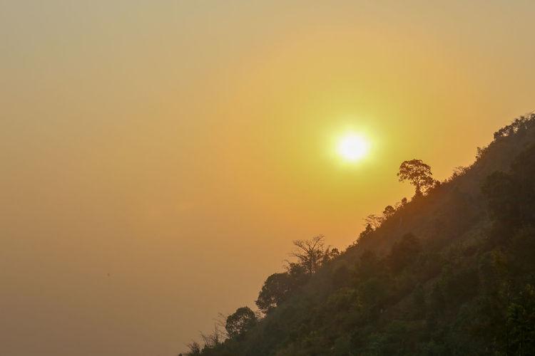 Scenic view of tree against orange sky
