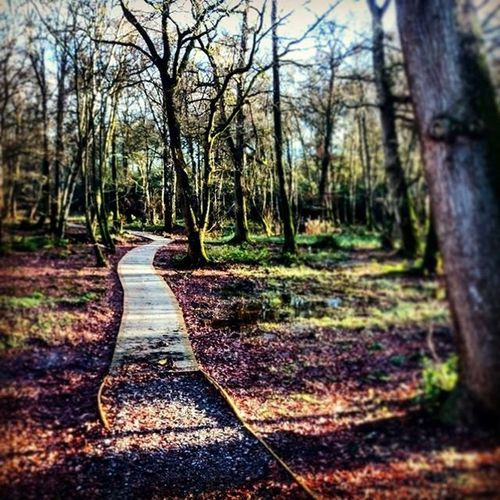 Path in the forest Argory Armagh Insta_armagh Northernireland DiscoverNI Discovernorthernireland PureNorthernIreland Nationaltrust Nationaltrustni Forest ForestPark Ig_myshot Trees Leaves Autumn Shadow Walk Walking Path Leadinglines Icu_ireland Ireland_gram Winter Seasonal Nature mothernature instagram