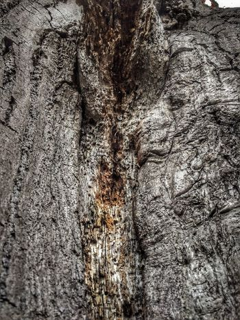 38/365 HDR 003 IPhoneography Photooftheday Sorcerer86 Eyeemgermany Bilsbekblog Iphone6 Photo365 Eyeempinneberg Tree Trunk Textured  Tree Nature Full Frame Close-up Backgrounds Rough No People Cracked Bark Outdoors Day Growth Beauty In Nature Knotted Wood