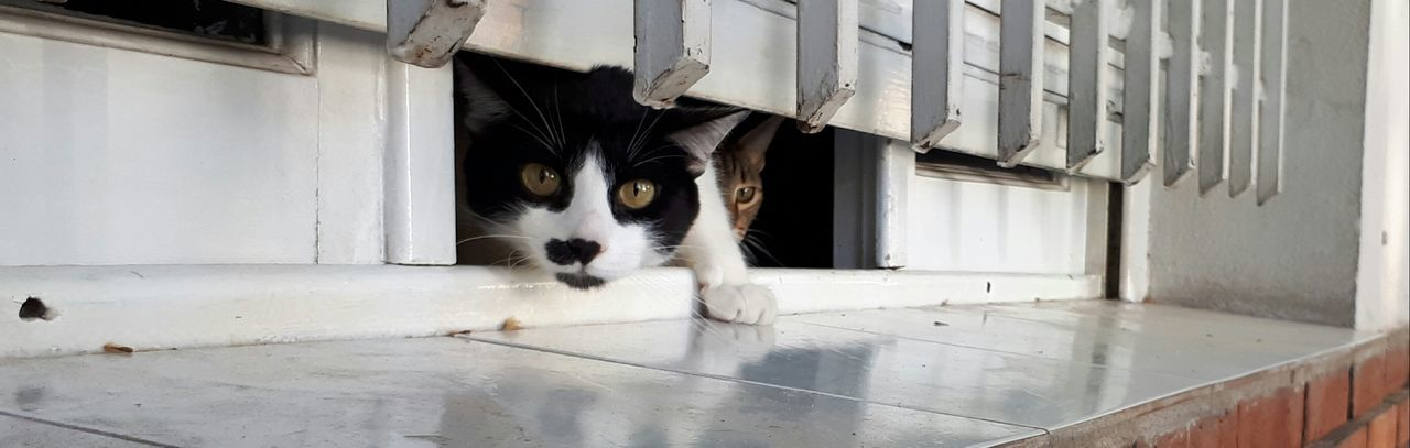 Cats Window No