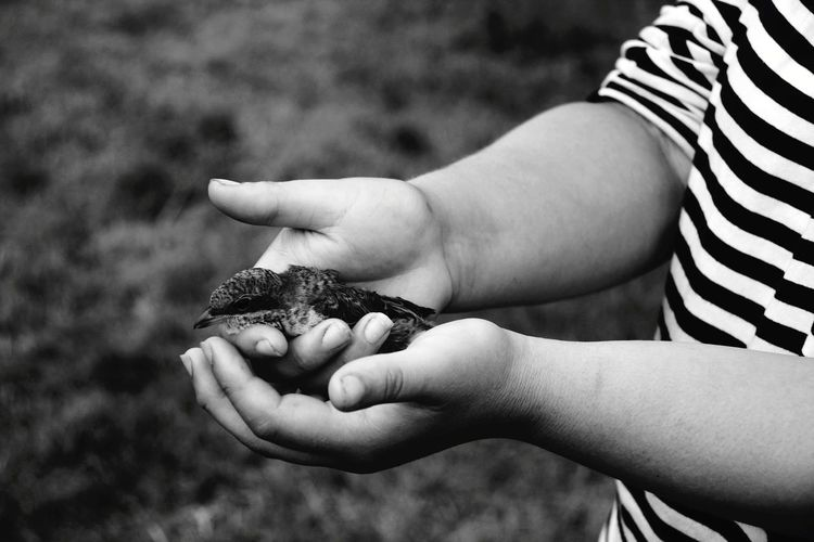 Midsection of child holding bird