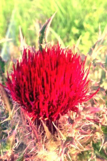 Alabama Spring Nature Nature_collection