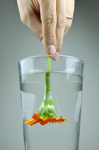 Flower placed upside down in the water cup Close-up Drowned Flower Freshness Gray Background Holding Human Body Part Human Hand Nature One Person Studio Shot Underwater Water Resist