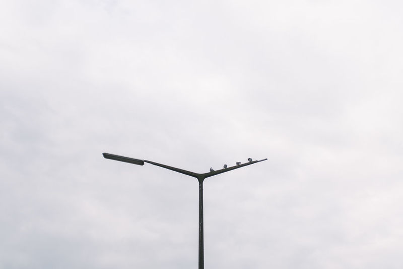 balance Balance Act Bonjour Tristesse Doves EyeEm Best Shots Getting Inspired Lamppost Getting Creative